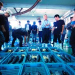 嗚呼絶景四国哉-8.活気溢れる須崎の魚市場