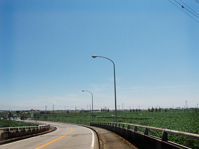 国道11号から西に延びる県道12号鳴門池田線、鳴門市大津町辺りで見える風景も好き