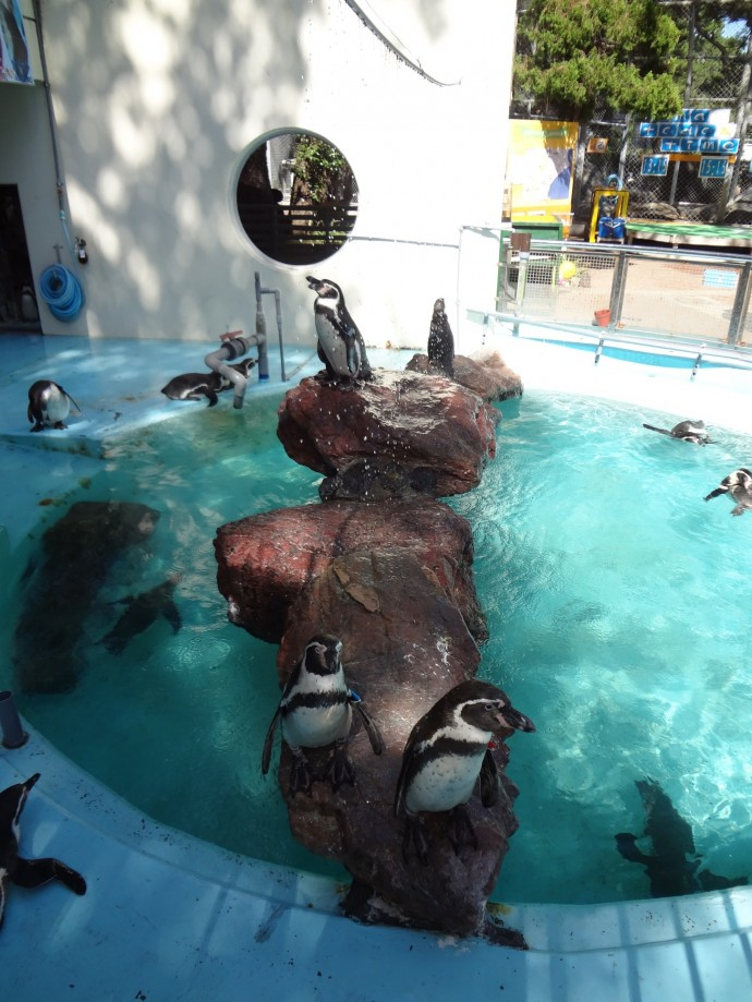 気持ち良さげに水を浴びるペンギン