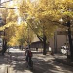 《四国の紅葉》高知丸の内の銀杏並木