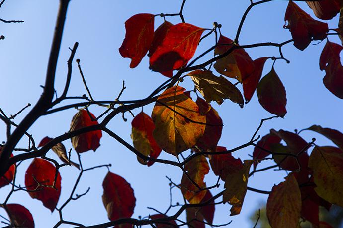 紅葉の見頃まであと少し。