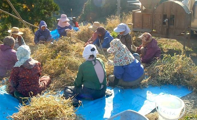農作業など、宿泊の際には季節ごとに様々な集落の暮らしぶりに出会えます。写真は皆で集まり、昔ながらの方法で小豆の脱穀をしているところ。