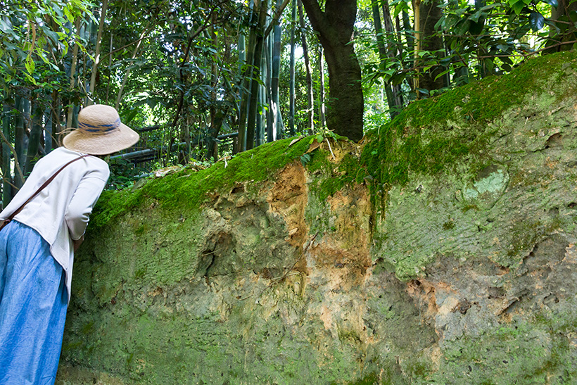 こちらは土壁のタイプ。野生の猪が爪で引っ掻いた跡もあります