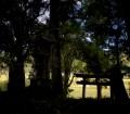 高岡神社03