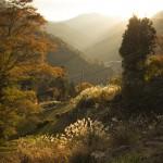 晩秋の祖谷
