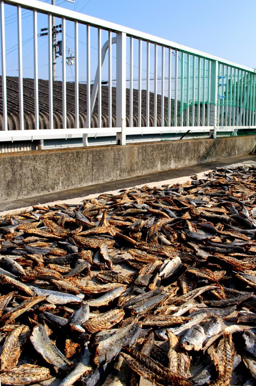 熊本県天草市の水産会社から仕入れている原料のムロアジ節。手作業で2つに割り、骨を取り除いた後、天日干し。カラスや猫が狙うため、普段は、網をかけている。