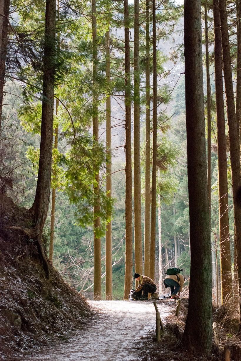 藁縄のアイゼンを装着する人の姿も。朝の光が木々の間をぬって優しく届きます。