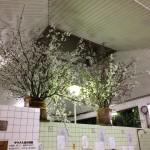 ただいま桜満開!銭湯清水湯でお花見へ《高知》