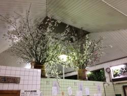 高知の銭湯清水湯の花見