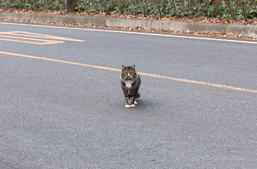 ではなく猫でした。全然車をよけてくれない 笑