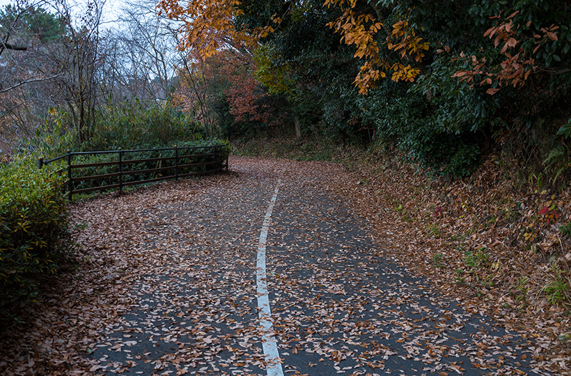 池の周辺は遊歩道が整備されている