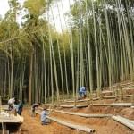《徳島》4月19日の日曜日は、新野竹林コンサートへどうぞ!