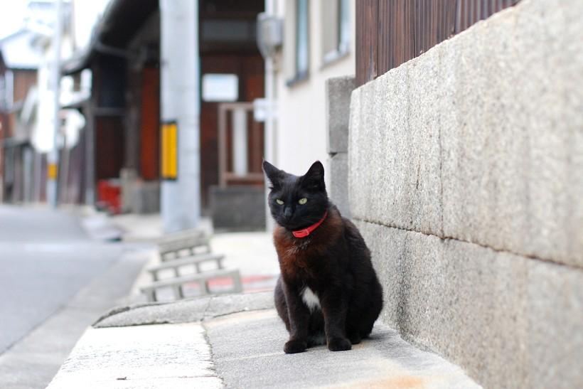 三津浜のネコ