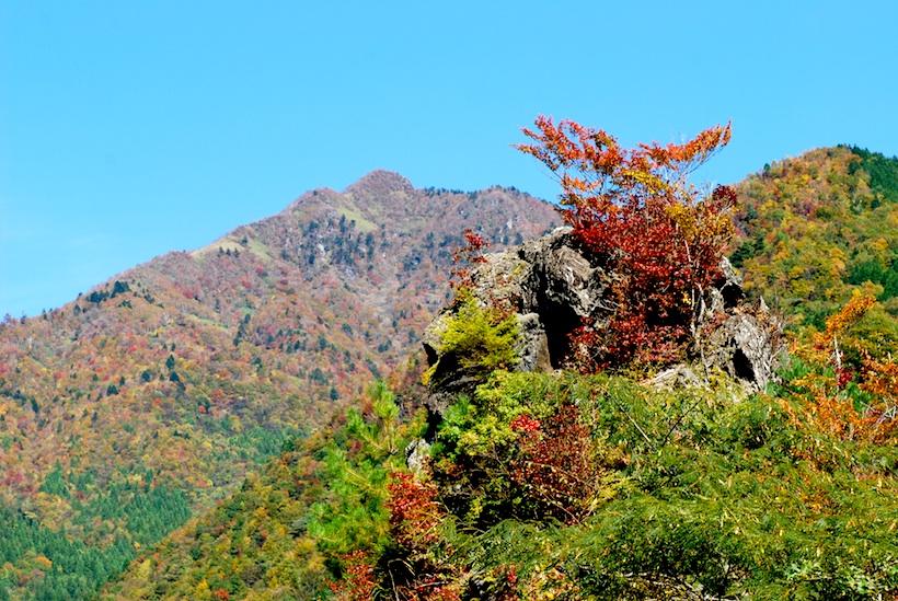 昨年四国大陸でもご紹介した「落合峠」付近の紅葉。