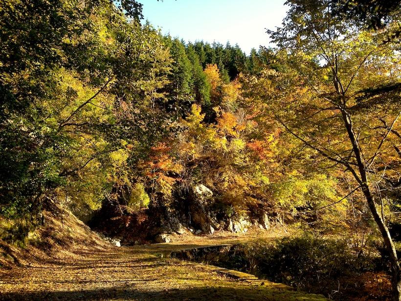 かかしの里「名頃」が登山口になる三嶺(標高1,894m)の登山道は紅葉の回廊。(2014年10月26日撮影)